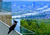 Wien, Blick vom Kahlenberg